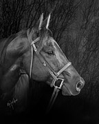 Horse Pictures Prints - Mystical Black Bridled Horse Print by Renee Forth Fukumoto