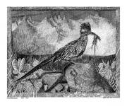 Southwest Drawings Prints - N M Roadrunner Yum Yum Yum Print by Jack Pumphrey