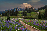 Mount Rainier Prints - Naches Loop Bursting with Flowers Print by Mike Reid