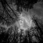 Emotions Photo Prints - Naked Branches Print by Bob Orsillo