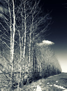 Shadows Photos - Naked Trees by Stylianos Kleanthous