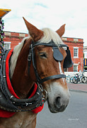 Carriage Horse Photos - Nancy Up Close by Suzanne Gaff