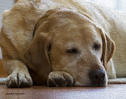 Labrador Digital Art - Nap Time 1 by Gerald Marella