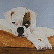 Boxer Paintings - Nap Time by Vicki Greene