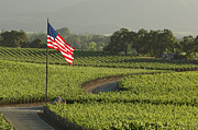 Napa Valley Photos - Napa by Christian Heeb