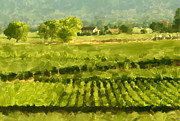 Malbec Paintings - Napa Detail by Paul Tagliamonte