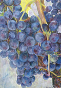 Vine Paintings - Napa Grapes 1 by Nick Vogel