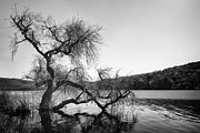 Black Pastels Metal Prints - Napa Lake Metal Print by Francesco Emanuele Carucci
