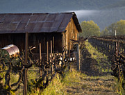 Farming Barns Posters - Napa Morning Poster by Bill Gallagher