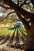 Napa Valley Vineyard Framed Prints - Napa Valley Homestead Framed Print by Ellen Cotton
