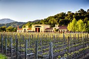 Wine Vineyard Photos - Napa Valley Spring Sunset by George Oze