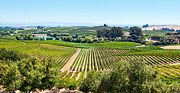 Rolling Hills Vinyards Prints - Napa Valley - Wine Vineyards in Napa Valley California. Print by Jamie Pham