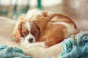 Napping Puppy Print by Kay Pickens