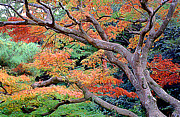 Bucolic Scenes Photos - Narita Autumn Tree Japan by Wernher Krutein