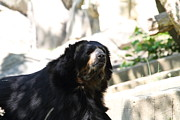 Bears Photos - National Zoo - Bear - 01131 by DC Photographer