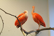 Smithsonian Prints - National Zoo - Birds - 011321 Print by DC Photographer