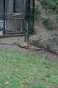 Bigcat Photos - National Zoo - Leopard - 12122 by DC Photographer