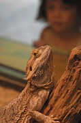 Lizard Art - National Zoo - Lizard - 12123 by DC Photographer