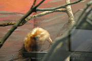 Mammal Photo Prints - National Zoo - Mammal - 121215 Print by DC Photographer