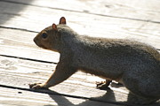 National Zoo - Mammal - 12122 Print by DC Photographer