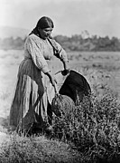 Edward Curtis Posters - Nativa American Pomo Woman Poster by The  Vault