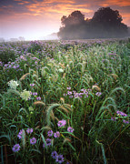 Glacial Park Posters - Native Prairie Sunrise Poster by Ray Mathis
