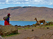 Llama Digital Art Metal Prints - Native Woman and Her Llama by Lake Ayumara-Peru Metal Print by Ruth Hager