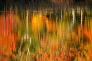Burst Framed Prints - Natural Brushstrokes - New England Autumn reflections  Framed Print by Thomas Schoeller