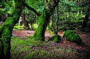 Green Forest Photos - Natural Emeralds II. Wicklow. Ireland by Jenny Rainbow
