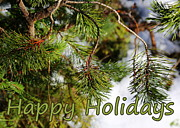 Bows Photos - Natural Holiday Card by Carol Groenen