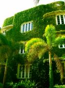 Florida House Photos - Natural Ivy House by Monique Wegmueller