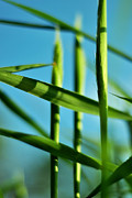 Abstract Realism Photos - Natural Order by Rebecca Sherman