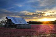 Randall Branham - Natural red White Blue Barn  Landscape