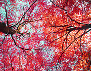 Fall Photographs Prints - Nature Abstract #1 - Colorful Red And Blue Abstract Nature Fine Art Photograph - Digital Painting Print by Artecco Fine Art Photography - Photograph by Nadja Drieling