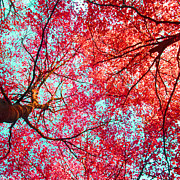 Fall Photographs Prints - Nature Abstract #2 - Colorful Red And Blue Abstract Nature Fine Art Photograph - Digital Painting  Print by Artecco Fine Art Photography - Photograph by Nadja Drieling