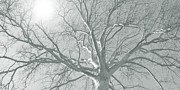 nature - art - Winter Sun  Print by Ann Powell