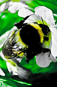 Steven Brennan Prints - Nature at work Print by Steven Brennan