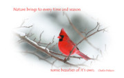 Red Cardinal Prints - Nature Brings Print by Karol  Livote