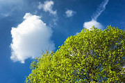 Nature In Spring - Bright Green Tree And Blue Sky Print by Matthias Hauser