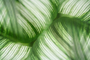 Photo Manipulation Digital Art Framed Prints - Nature Leaves Abstract in Green 2 Framed Print by Natalie Kinnear