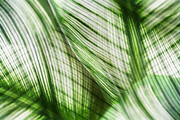 Photo Manipulation Digital Art Framed Prints - Nature Leaves Abstract in Green Framed Print by Natalie Kinnear