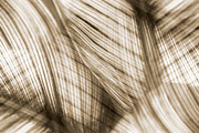 Nature Leaves Abstract In Sepia Print by Natalie Kinnear