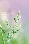 HJBH Photography - Nature pastels