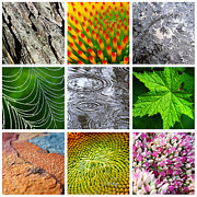 Macro Digital Art - Nature Patterns And Textures Square Collage by Christina Rollo