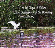 Andrea Moore - Nature Quote