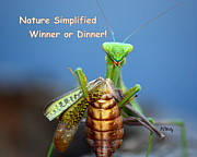 Praying Mantis Photos - Nature Simplified by Patrick Witz