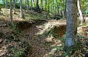 Kristin M Crist - Nature Trail