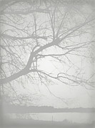 Black And White Landscape Photograph Posters - Nature Tree Fog  Photography Poster by Ann Powell