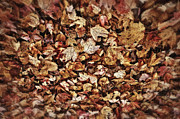 Earth Tone Prints - Natures Abstract of Fall Leaves Print by Lee Craig