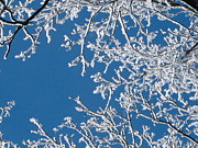 Ice On Branch Prints - Natures Art Print by Denise Mazzocco